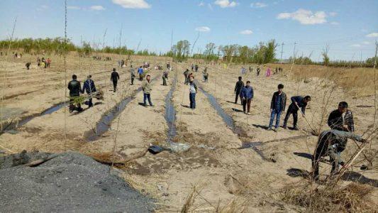 科左后旗分公司开展植树活动